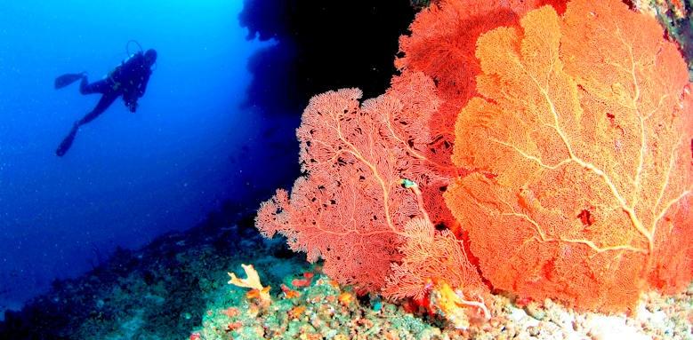 Anantara Veli Resort & Spa, diving