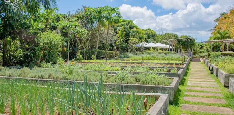 Shanti Maurice, Herb Garden