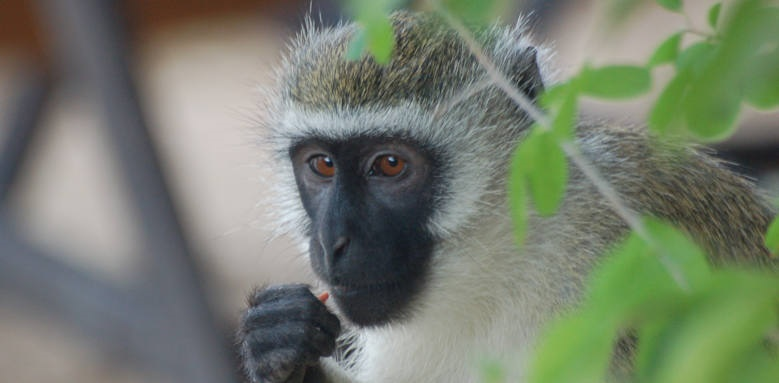 Waterlovers Beach Resort, monkey