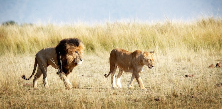 Highlights of Kenya, lions