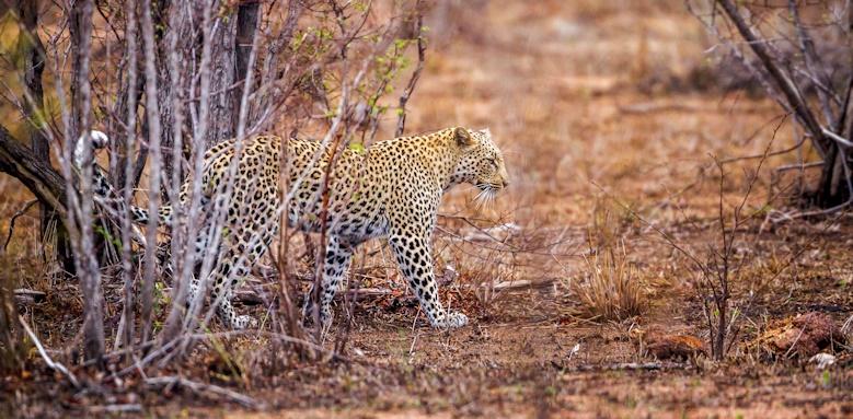 Explore Sri Lanka, Leopard