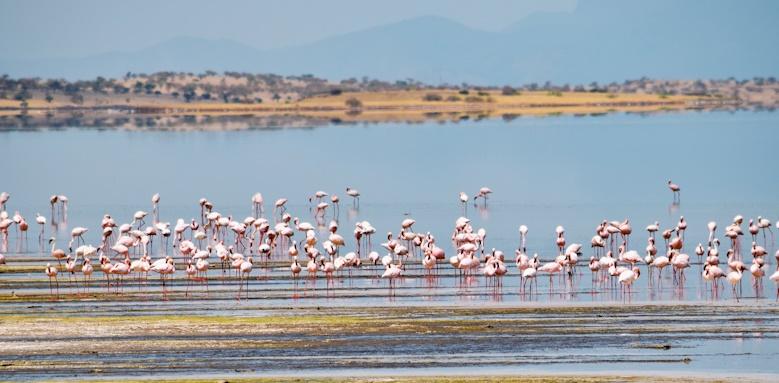 Honeymoon Tour of Tanzania, Flamingo