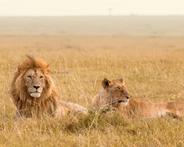 Honeymoon tour of Kenya