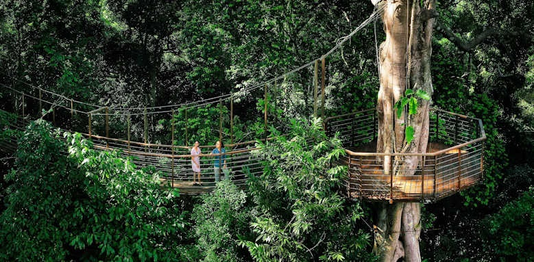 Crystal Creek, canopy walk