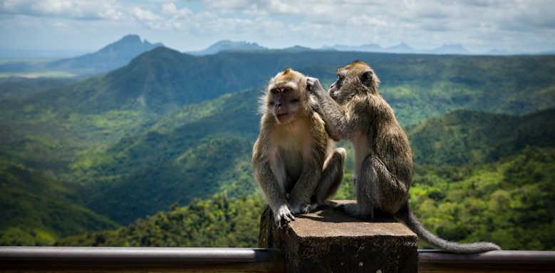Anantara Iko Mauritius, monkeys