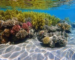 Coral Reef colours at Makadi Bay