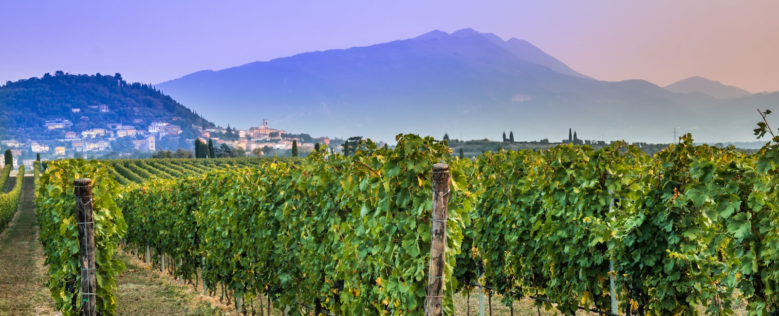 bardolino vineyards, lake garda