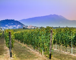 bardolino vineyards, lake garda