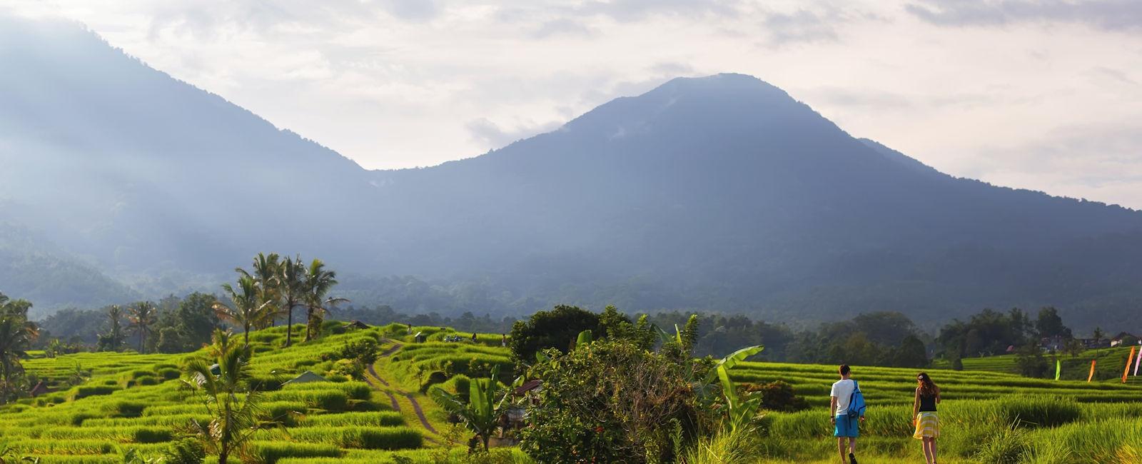 Ubud, main image of rice paddies